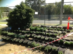 all our new delicious plants